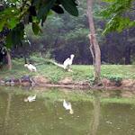 chattbir zoo cranes.jpg