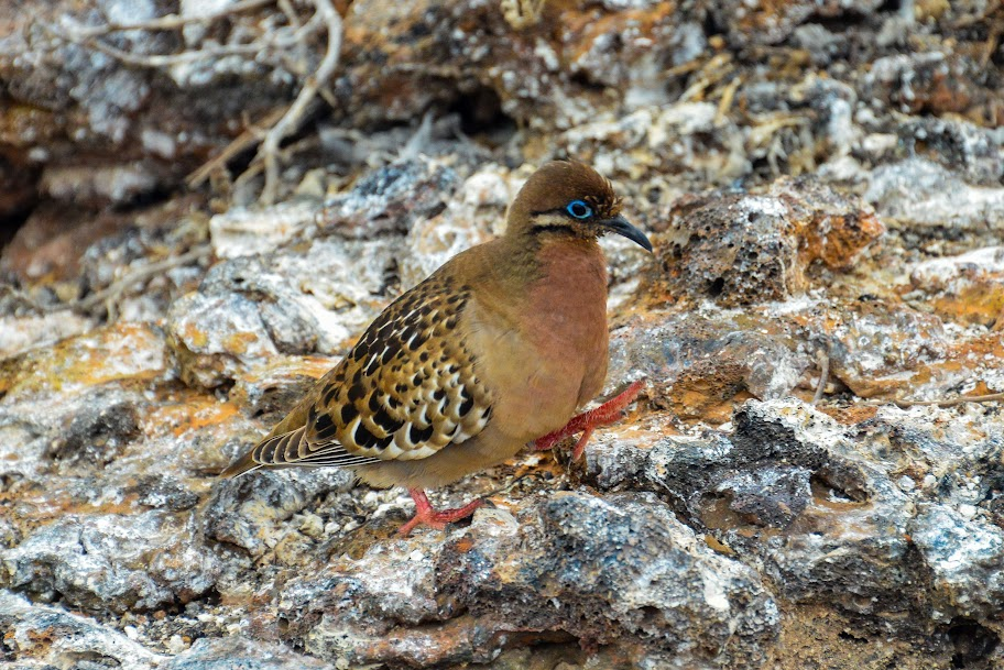 galapagos - Galapagos_FB_2-15.jpg