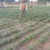 मौसम की बेरूखी से गिद्धौर प्रखंड के किसान उपेक्षित