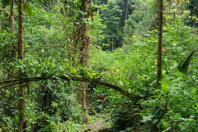 La forêt à Durango (San Lorenzo, Esmeraldas), 29 novembre 2013. Photo : J.-M. Gayman
