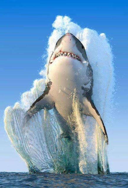 https://beautifulaactress.blogspot.com/2018/07/amazing-shark-fish.html