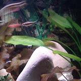 Fish - IMG_20121230_163438.jpg