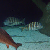 Downtown Aquarium - 116_3910.JPG