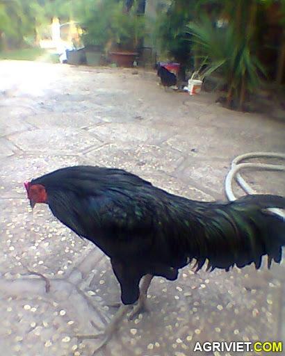 Agriviet.Com-Hi%CC%80nh0351.jpg