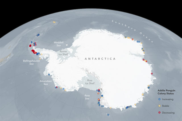 This graphic shows changes to the status of Adélie penguin colonies. Graphic: NASA Goddard Space Flight Center