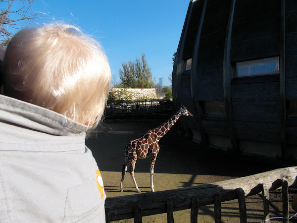 Eon ziet Giraffen