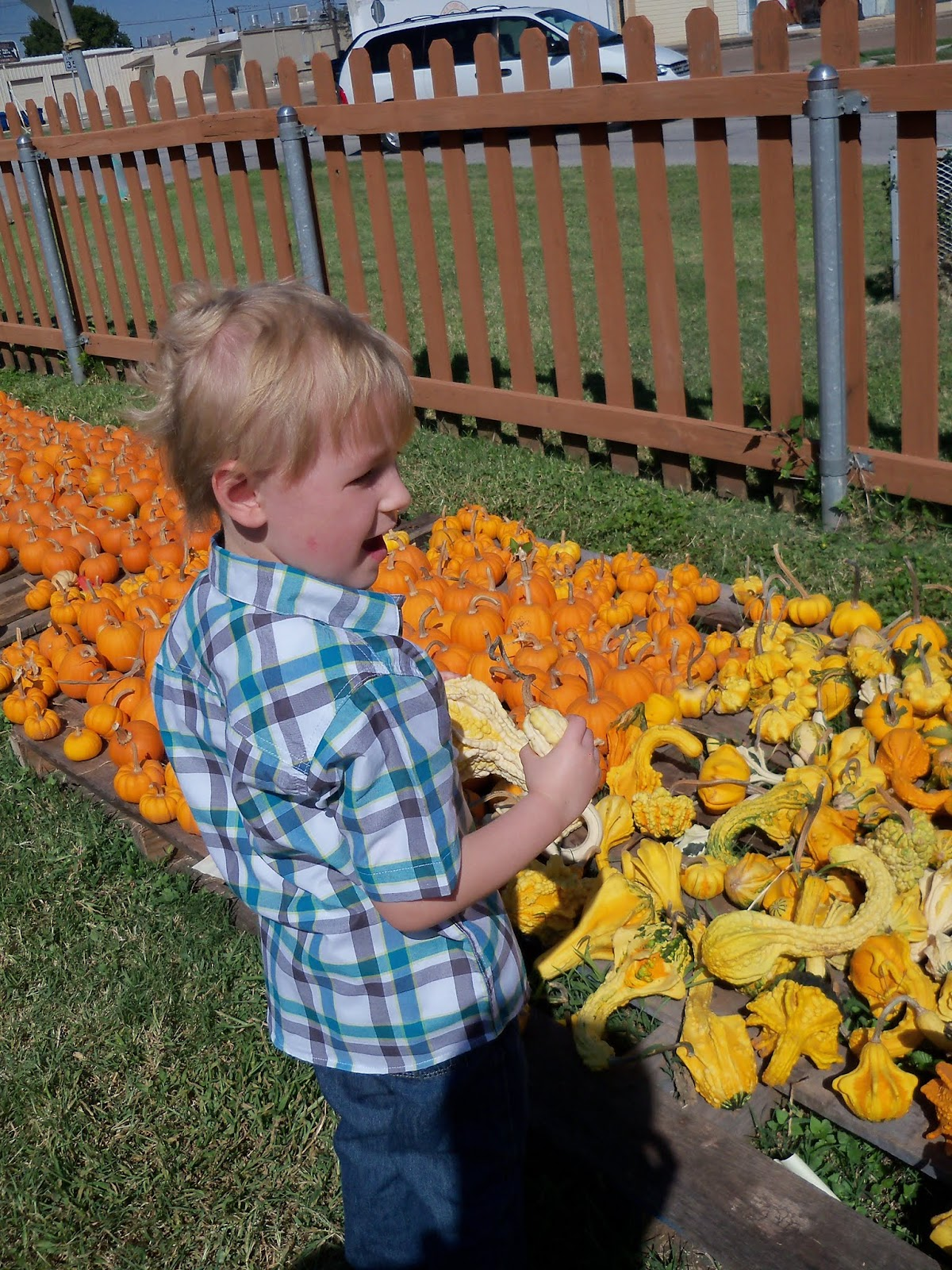 Pumpkin Patch 2015 - 100_0403.JPG