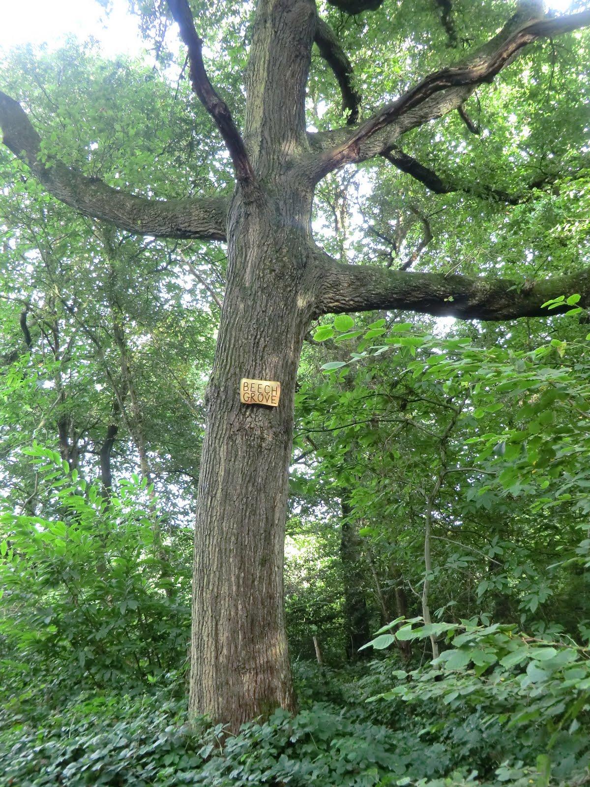 CIMG4277 Selsdon Wood