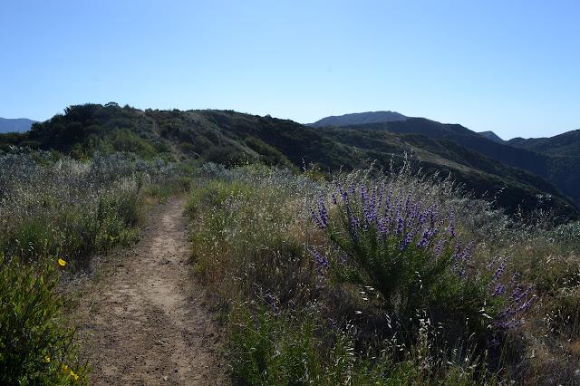 along the path