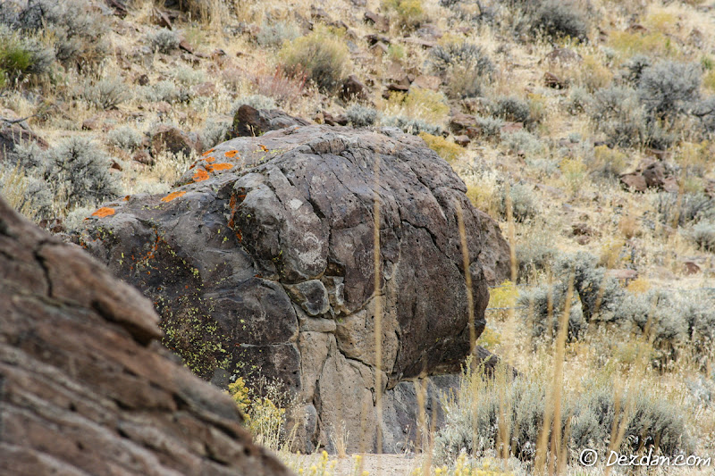 One final bighorn petroglyph on our way out.