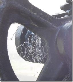 12 more cobweb