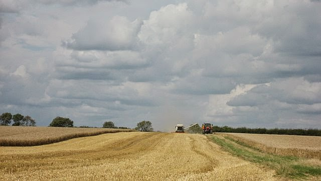 Manor Farm Harvest - August 2008 - pic02.jpg