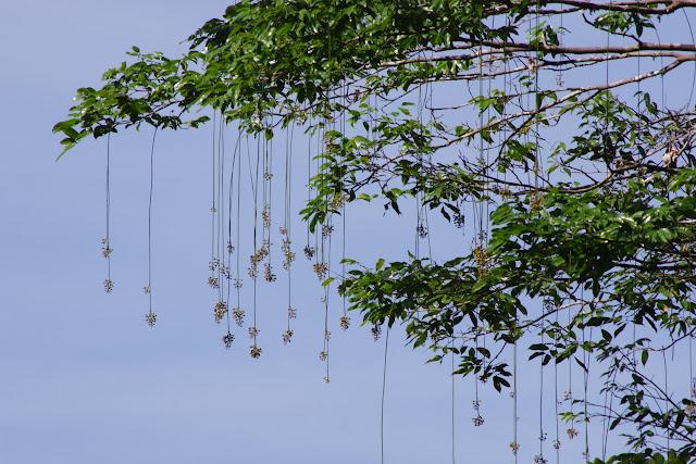Les Carbets de Coralie (Crique Yaoni), 2 novembre 2012. Photo : J.-M. Gayman