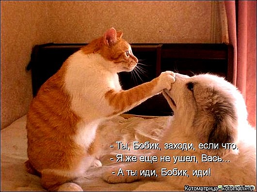 1395372367_kotomatritsa_ls_thumb[9]