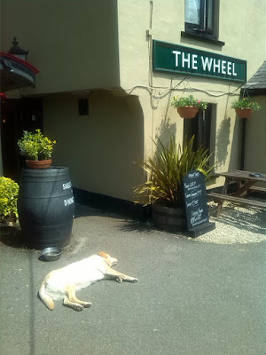 dog lazing in the sun outside pub
