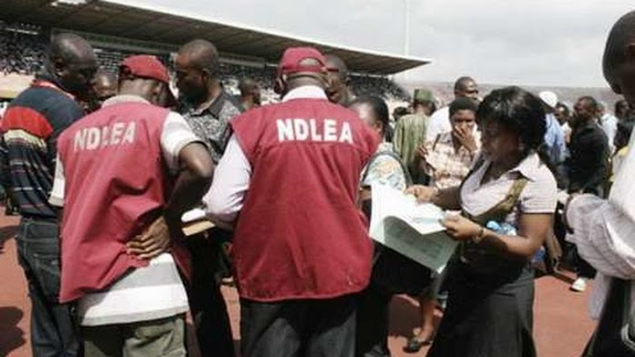 NDLEA destroys 2 hectares of Indian Hemp farms in Edo