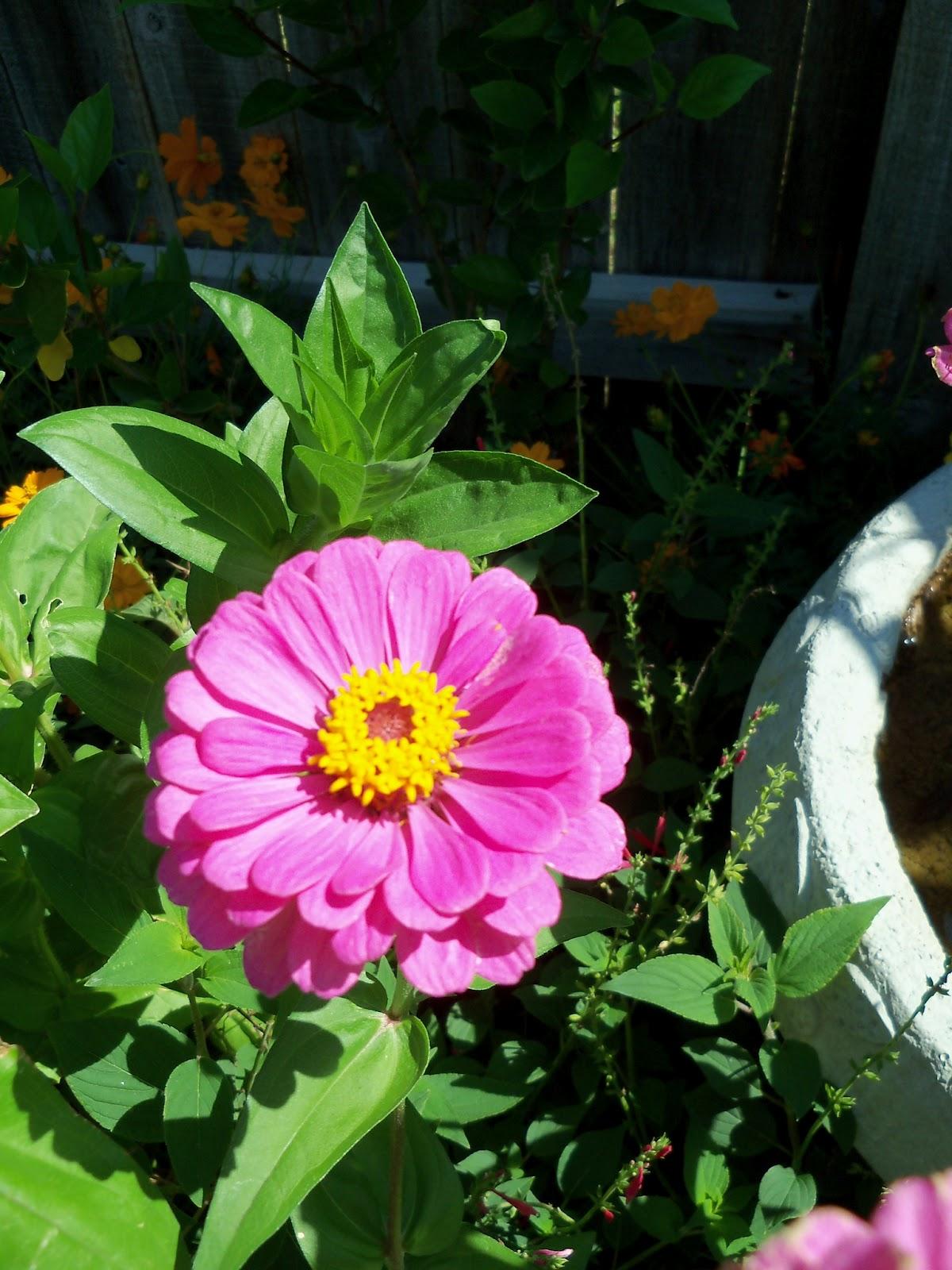 Gardening 2011 - 100_9118.JPG