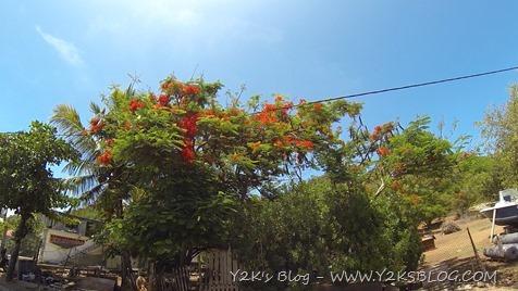 Tamarindo - Les Saintes - Guadalupa
