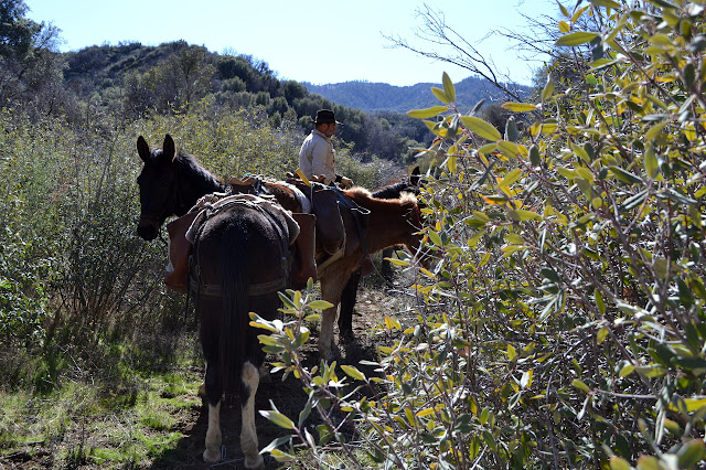 mules in the trail