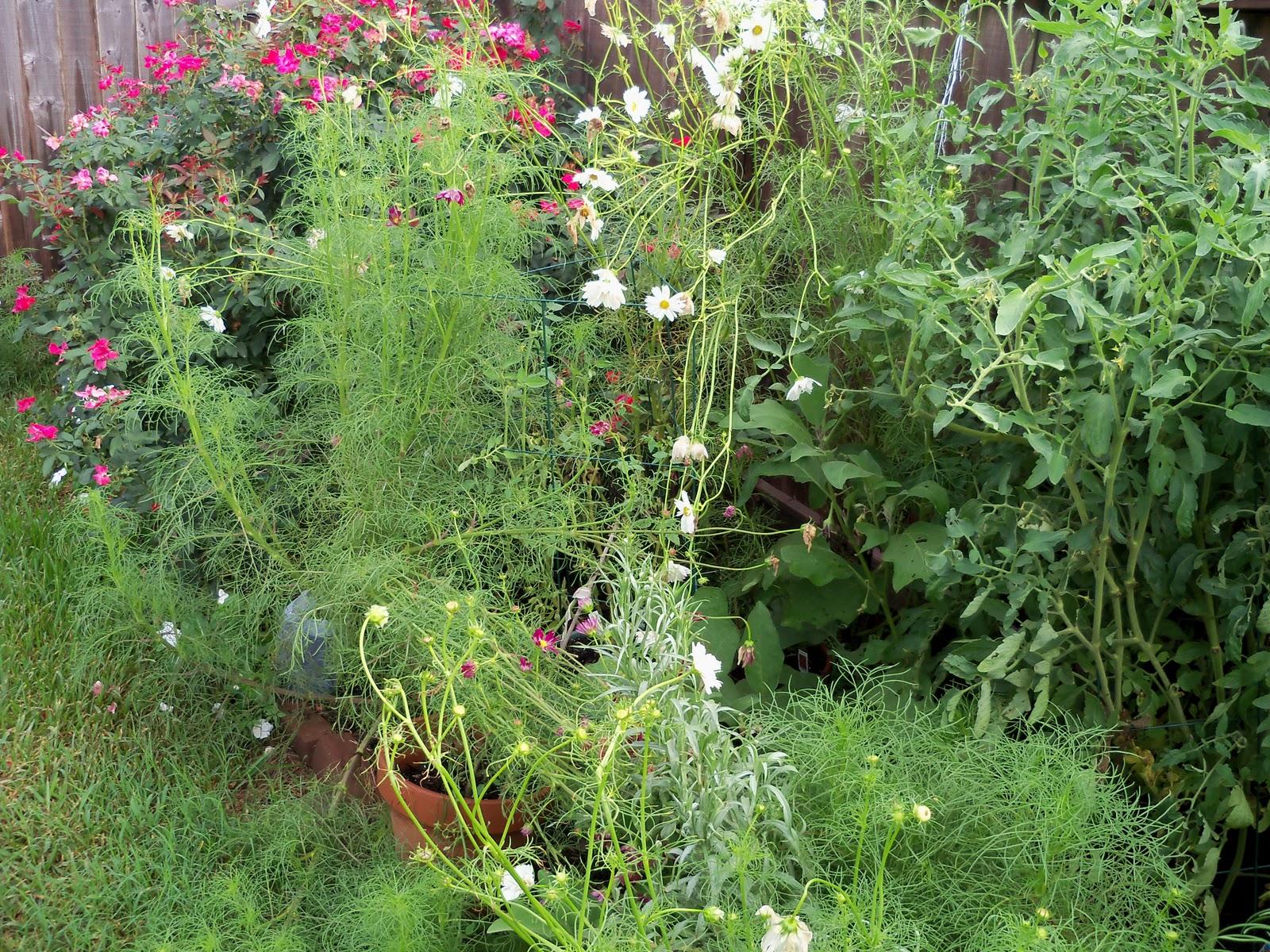 Gardening 2010, Part Three - 101_4731.JPG