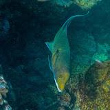 galapagos - Galapagos_FB-111.jpg