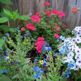 Gardening 2011 - 100_8179.JPG