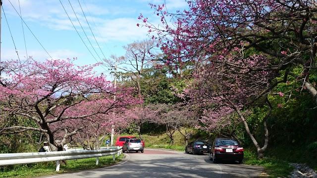 八重岳(桜並木)