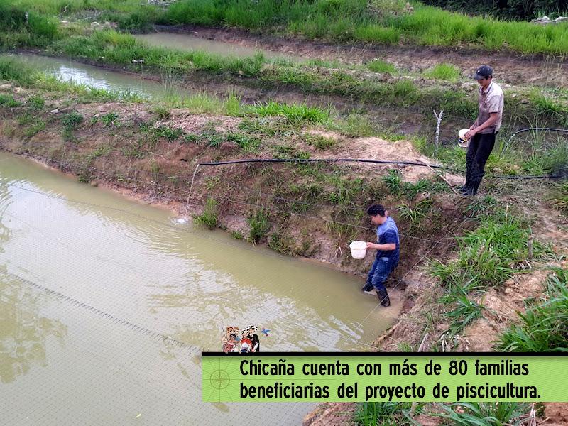CHICAÑA YA CUENTA CON MÁS DE 80 FAMILIAS BENEFICIARIAS DEL PROYECTO DE PISCICULTURA.
