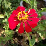Gardening 2011 - 100_0089.JPG