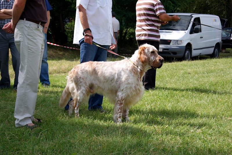 Wystawa psów - dsc00342.jpg