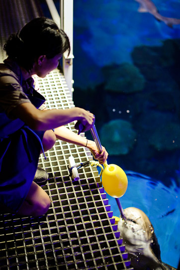 Shark Feeding at the Mandalay Bay Shark Reef Aquarium | Las Vegas Strip Attractions.
