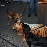 KNON-honden in Emmen - DSC_0828.JPG