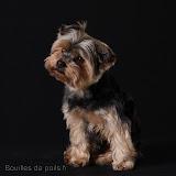 Bouilles de Poils - photos Studio - 2010-12-02%2Bbacchus%2B009.JPG