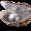 Ocean Pearl's profile photo