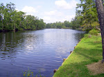 sam-houston-jones-state-park-lake-charles-la-2009 6-23-2009 2-52-22 PM 7-3-2009 10-51-53 AM.JPG