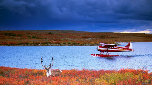 Caribou and Float Plane, Thelon River, Northwest Territories.jpg