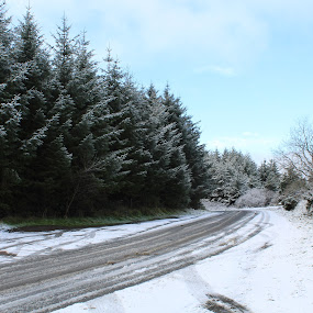 Snows on the Dublin Mountains by Morgan Bardon - Landscapes Weather ( sky, forest, mountains, dublin, green, nature, woodland, rural, woods, tree, winter, cold, clouds, scenic, trees, wicklow, hill, mountain, white, grass, snow, fields, landscape, ireland )
