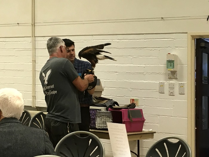 07 Mark Taking the Harris Hawk