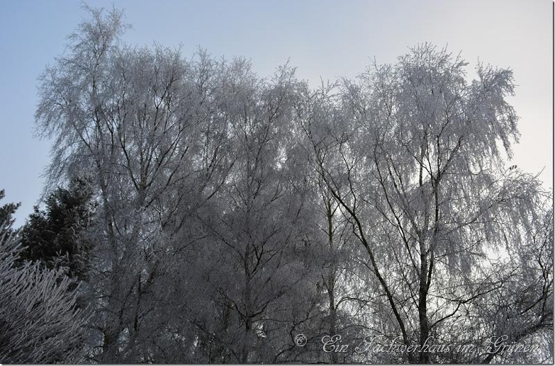 Auch die Bäume hüllen sich in Eiskristalle