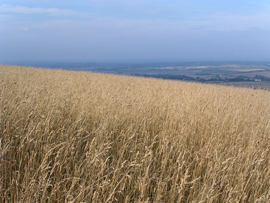 On the Downs near Alfriston