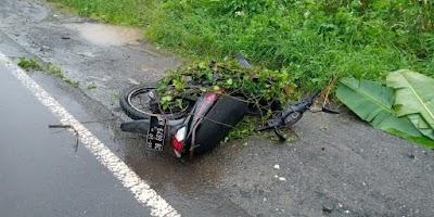 Ketiban Pohon, ASN di Pulpis Kecelakaan Tunggal di Mintin