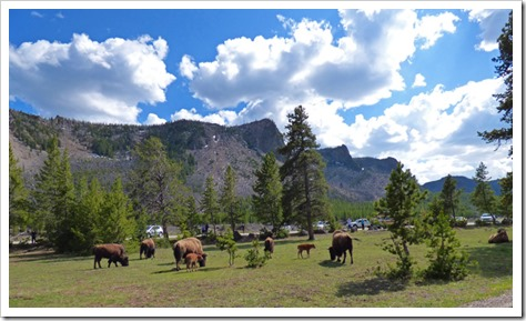 Between West Entrance and Madison Junction, Yellowstone May 2016