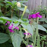 Gardening 2013 - 115_6039.JPG