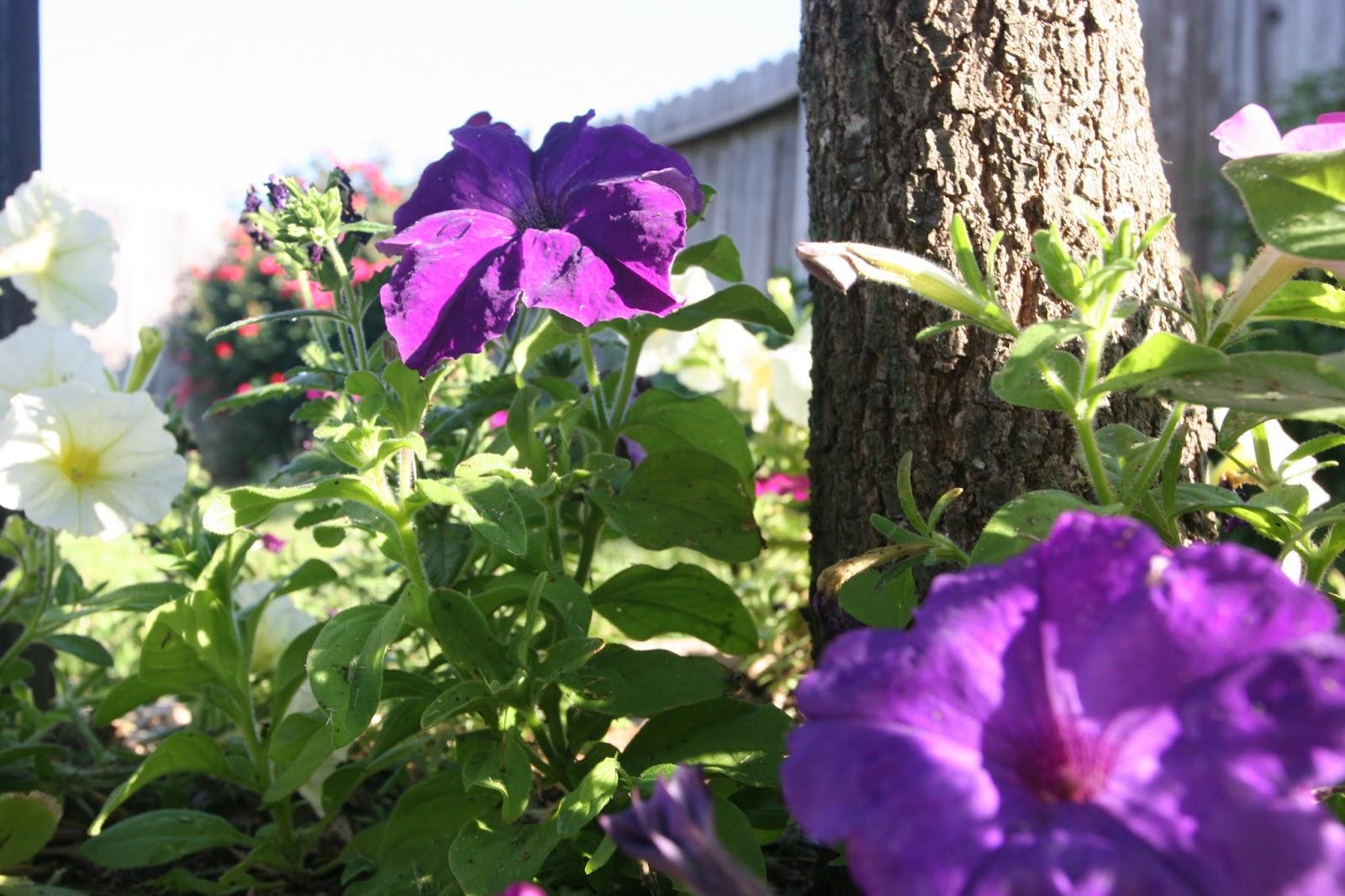 Gardening 2012 - IMG_3151.JPG
