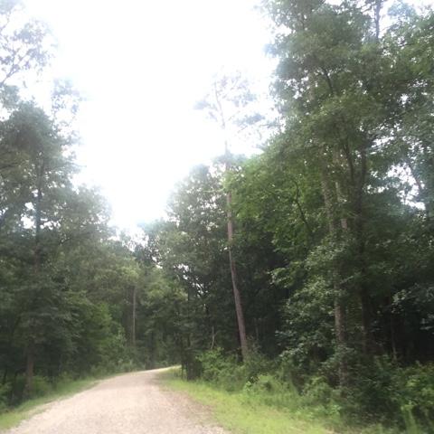 Beautiful tree-lined path