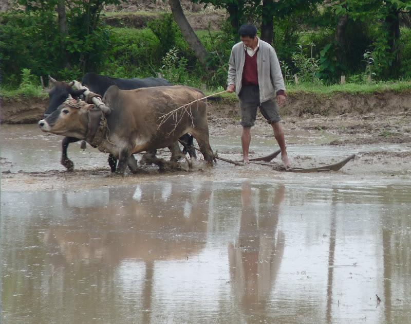 Chine .Yunnan,Menglian ,Tenchong, He shun, Chongning B - Picture%2B795.jpg