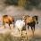 magnetfelddecke-pferde's profile photo