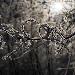 ZimniVetvicky2010