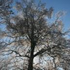 tn_lachaux-2010-12-26.jpg