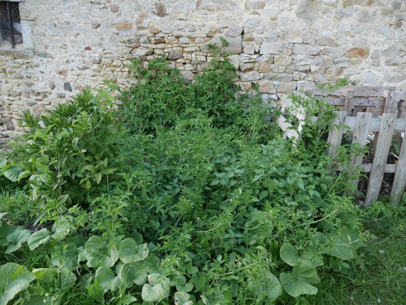 Un jardin en formation - Page 2 P1060390